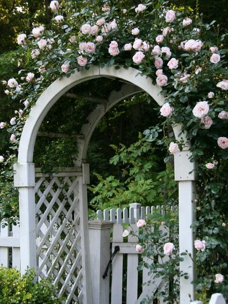 Καμάρες κήπου με λουλούδια