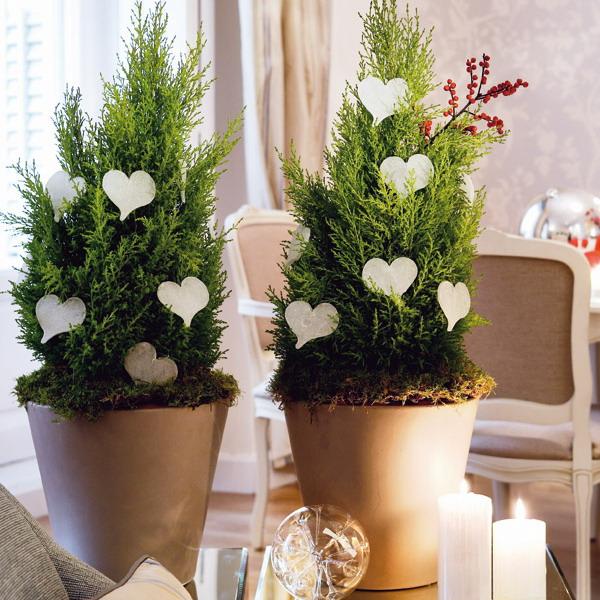 Οικονομική εσωτερική διακόσμηση με φυτά για τα Χριστούγεννα και το Νέο Έτος