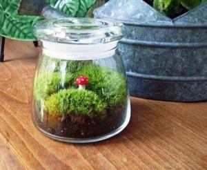 ιδέες για διακόσμηση με γυάλινες συνθέσεις φυτών1