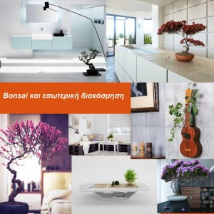 Bonsai και εσωτερική διακόσμηση16