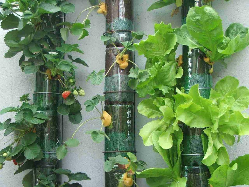 κήπος από πλαστικά μπουκάλια16