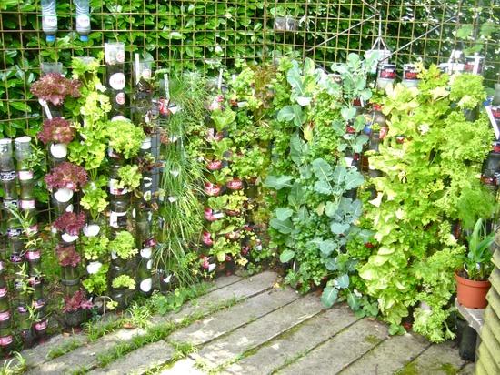 κήπος από πλαστικά μπουκάλια4
