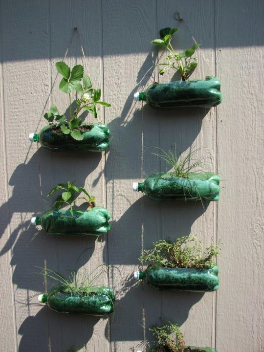 κήπος από πλαστικά μπουκάλια5