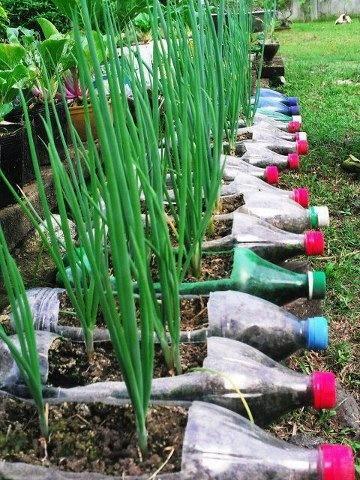 κήπος από πλαστικά μπουκάλια8