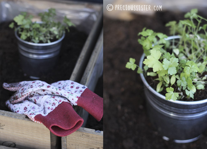 Diy κήπος με βότανα στο μπαλκόνι3