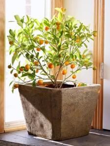 Μεγαλώνοντας δέντρα σε γλάστρες4
