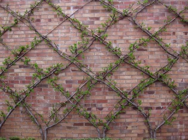 DIY WallArt Ιδέες για τον φράχτη του Κήπου σας24