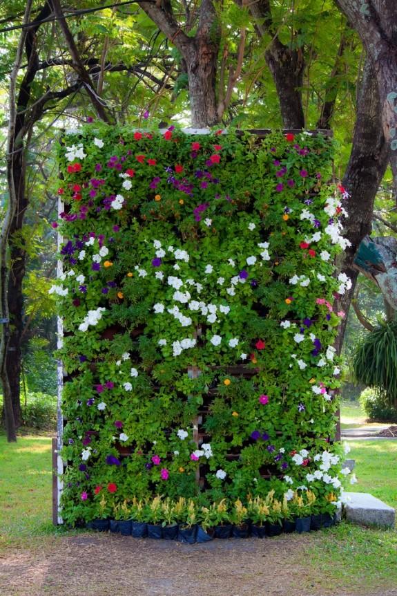 Φυτεύοντας στον τοίχο, κάθτος κήπος