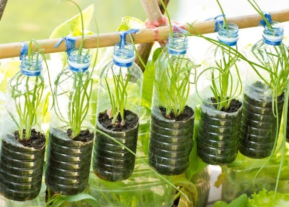 Φυτεύοντας στον τοίχο, πλαστικά μπουκάλια