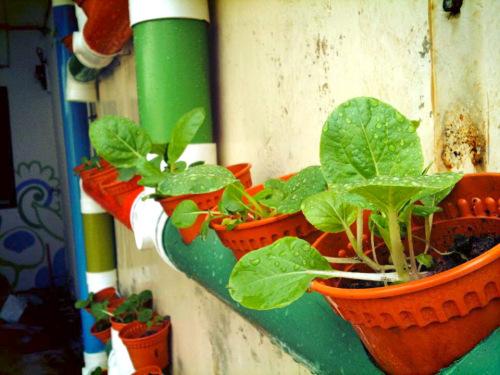 DIY κάθετος κήπος2