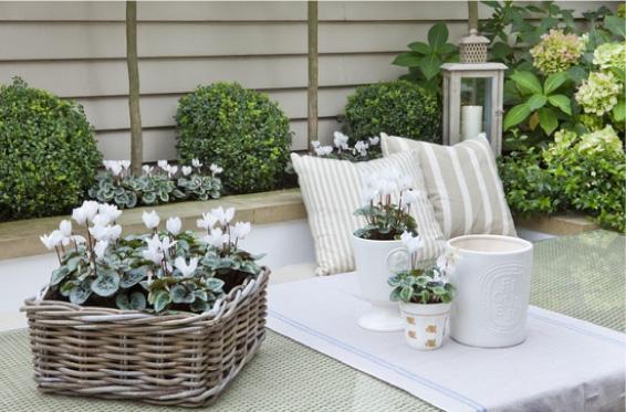 Ένας απίθανος κήπος με γεύση μεσογειακή5