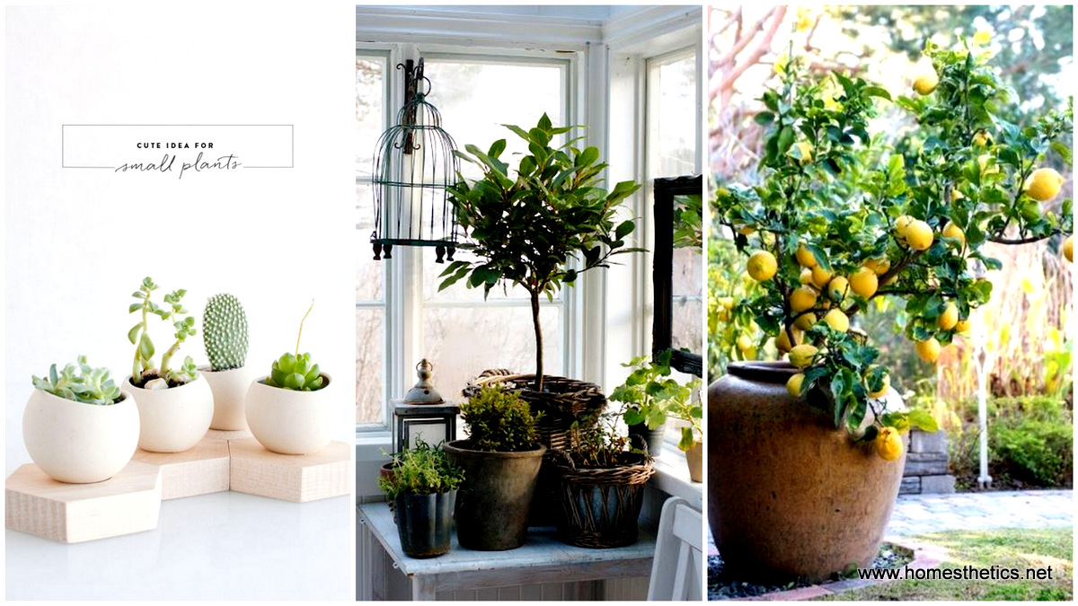 Μεταμορφώστε κάθε γωνιά του σπιτιου σας σε μια πράσινη όαση με έργα δημιουργικής κηπουρικής