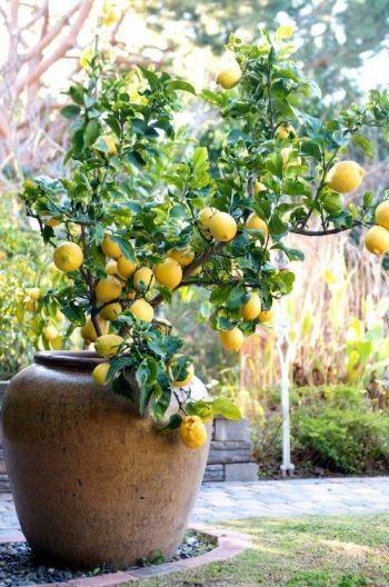 έργα δημιουργικής κηπουρικής12