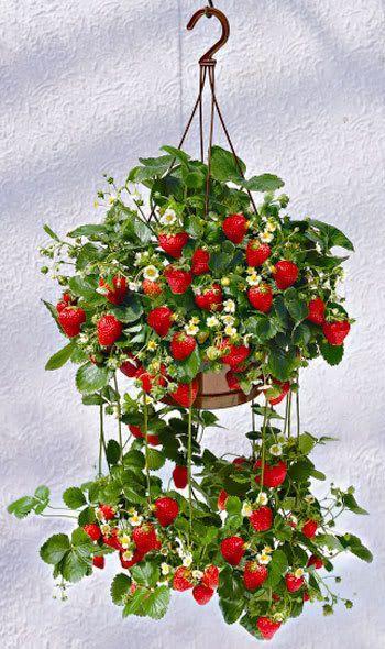 έργα δημιουργικής κηπουρικής2