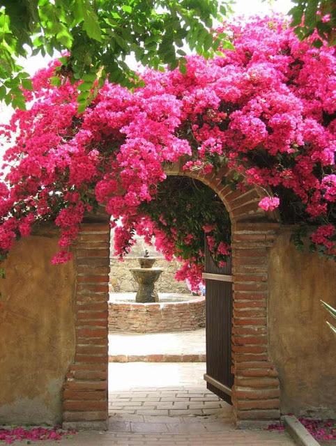 Βουκαμβίλια - Ένα μαγικό εξωτικό φυτό8