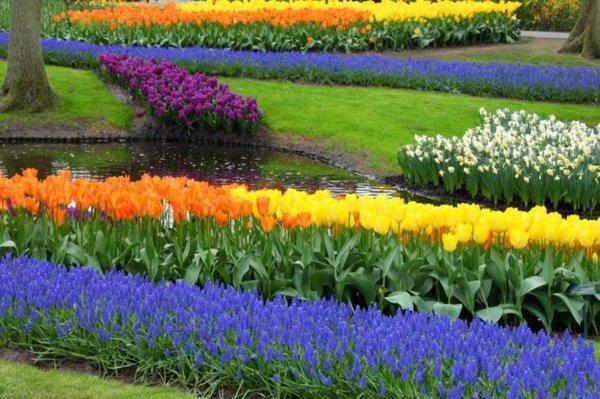 φυτογραφίες για το σχεδιασμό κήπων10