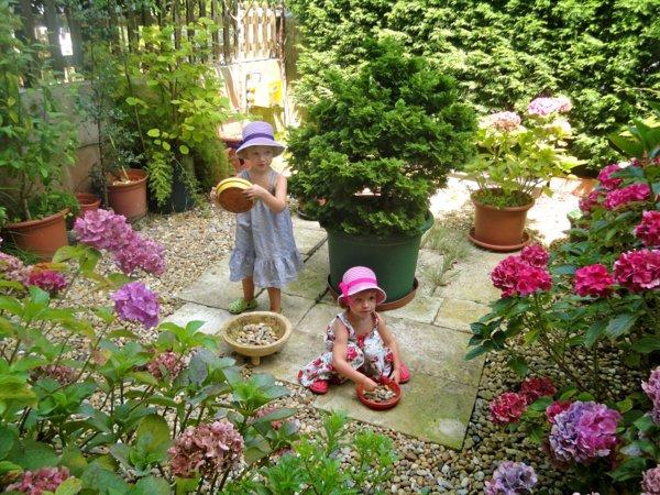 φυτογραφίες για το σχεδιασμό κήπων115