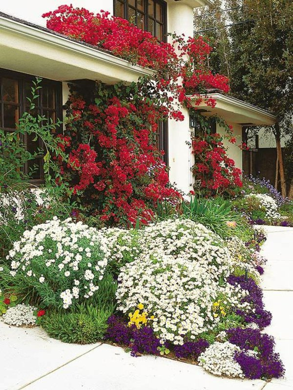 φυτογραφίες για το σχεδιασμό κήπων12