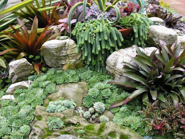 φυτογραφίες για το σχεδιασμό κήπων120