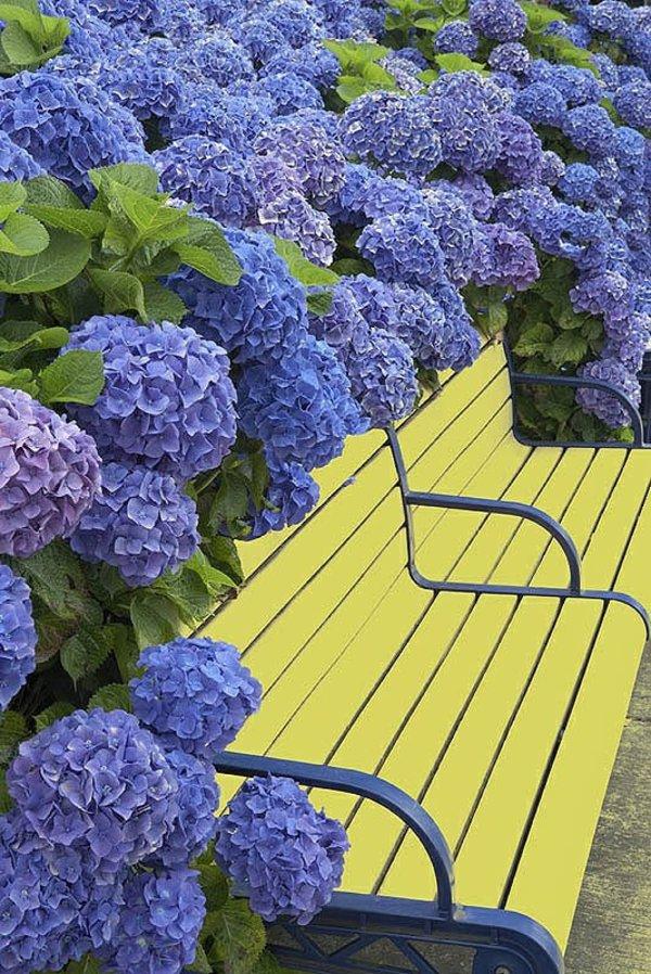 φυτογραφίες για το σχεδιασμό κήπων2