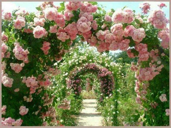 φυτογραφίες για το σχεδιασμό κήπων55