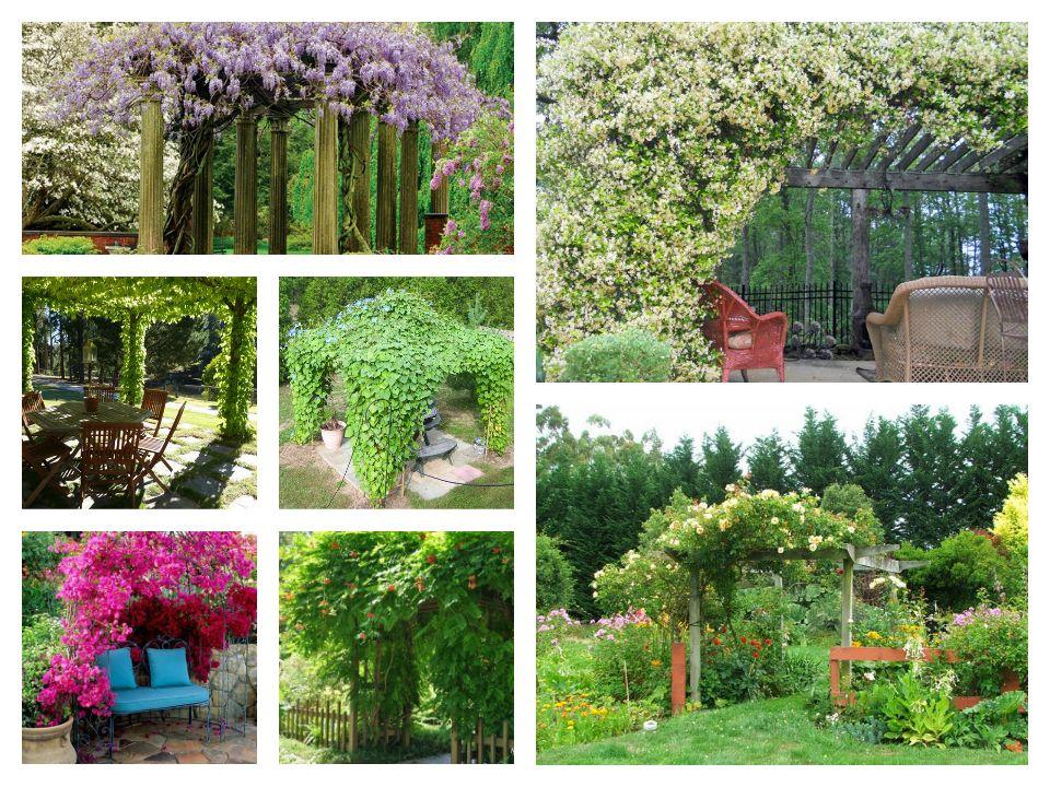 Τα 19 καλύτερα φυτά για πέργκολες