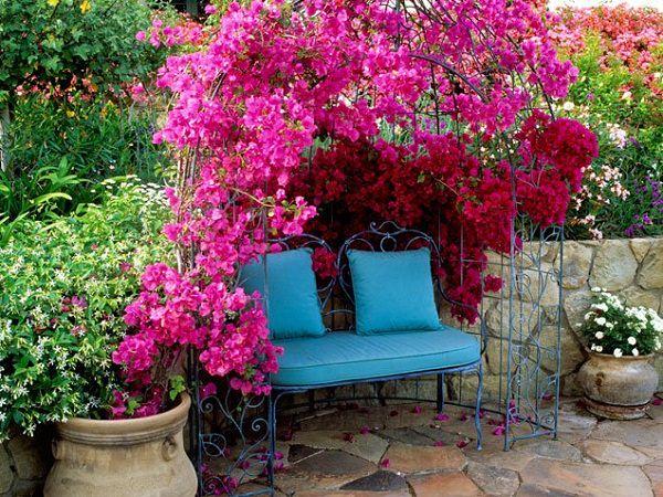 φυτά για πέργκολες12