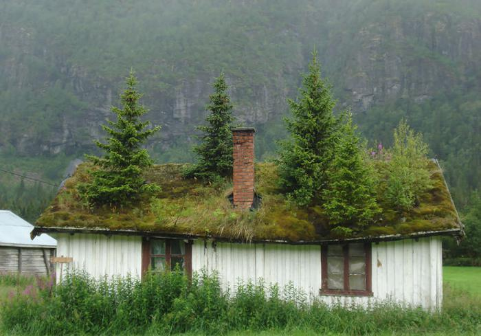 Πράσινη στέγη ιδέες1