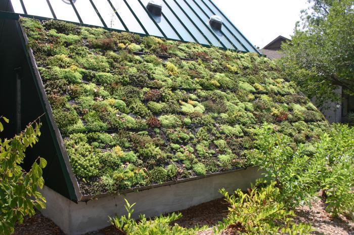 Πράσινη στέγη ιδέες31