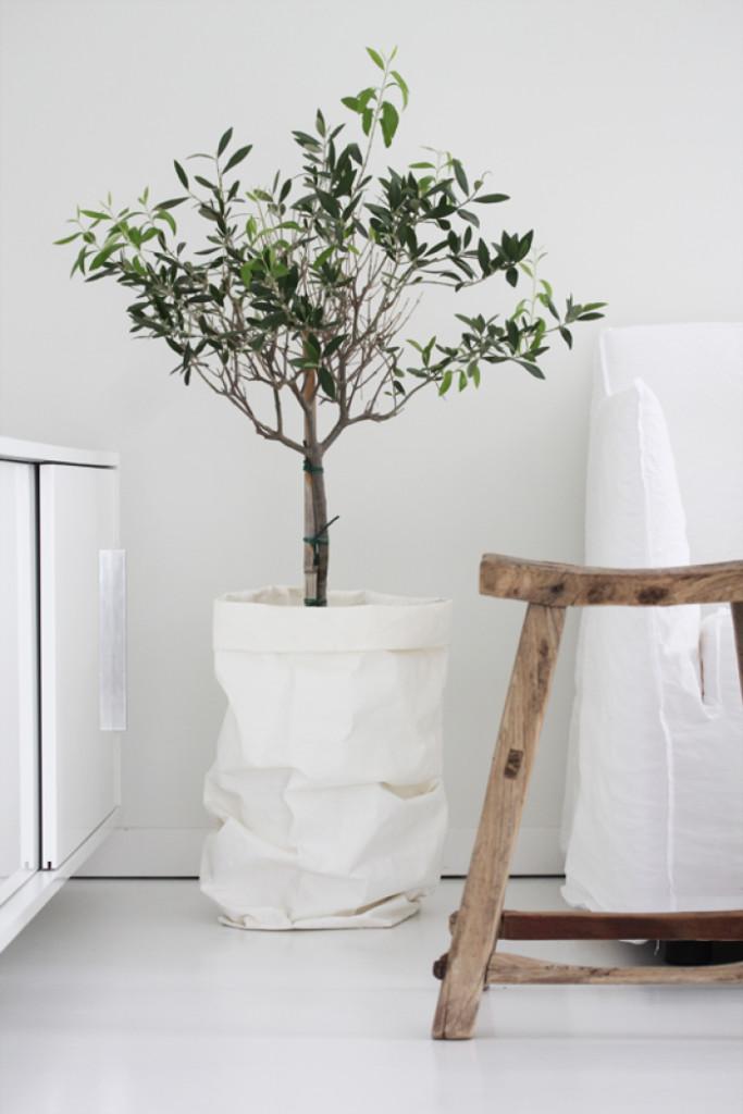 Διακοσμώντας με ελιές σε εσωτερικούς χώρους6