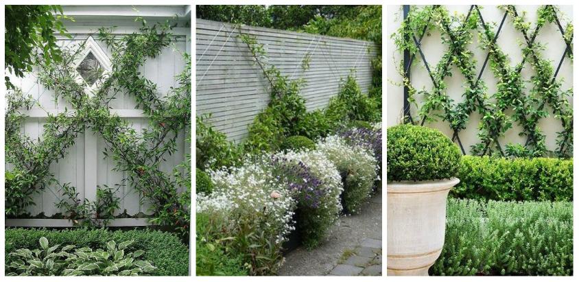 Αναρριχώμενα φυτά ιδέες (1)