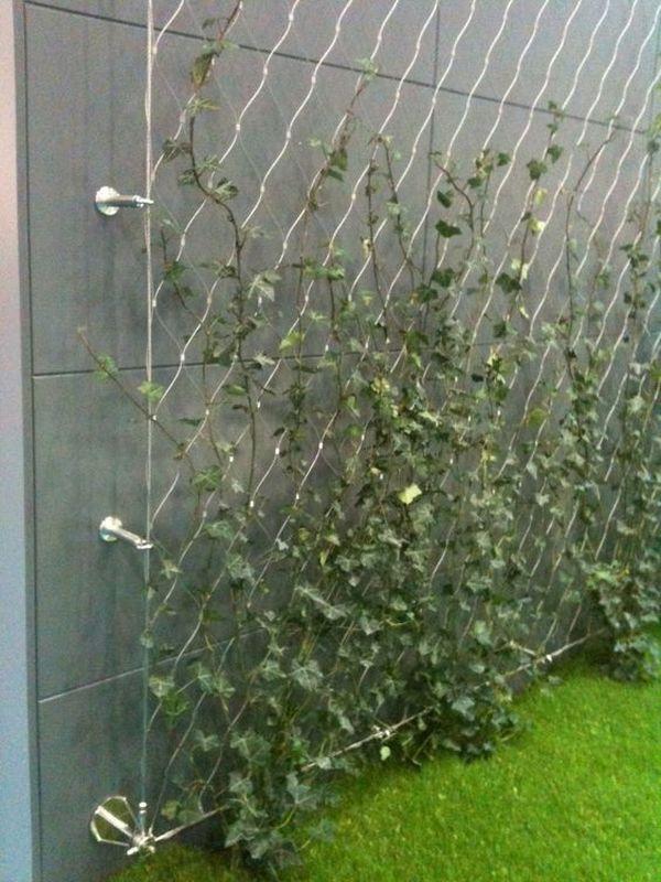 Αναρριχώμενα φυτά ιδέες (11)