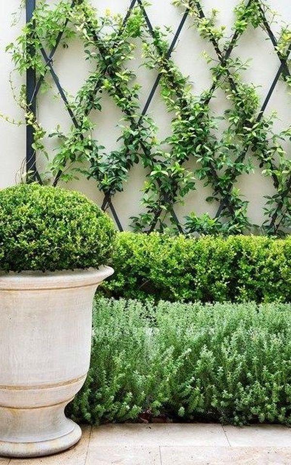 Αναρριχώμενα φυτά ιδέες (12)