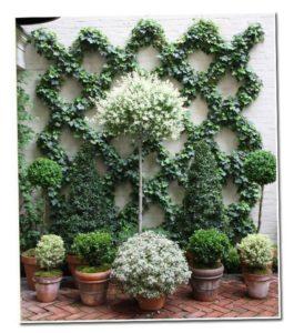 Αναρριχώμενα φυτά ιδέες (13)