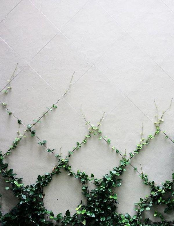 Αναρριχώμενα φυτά ιδέες (2)