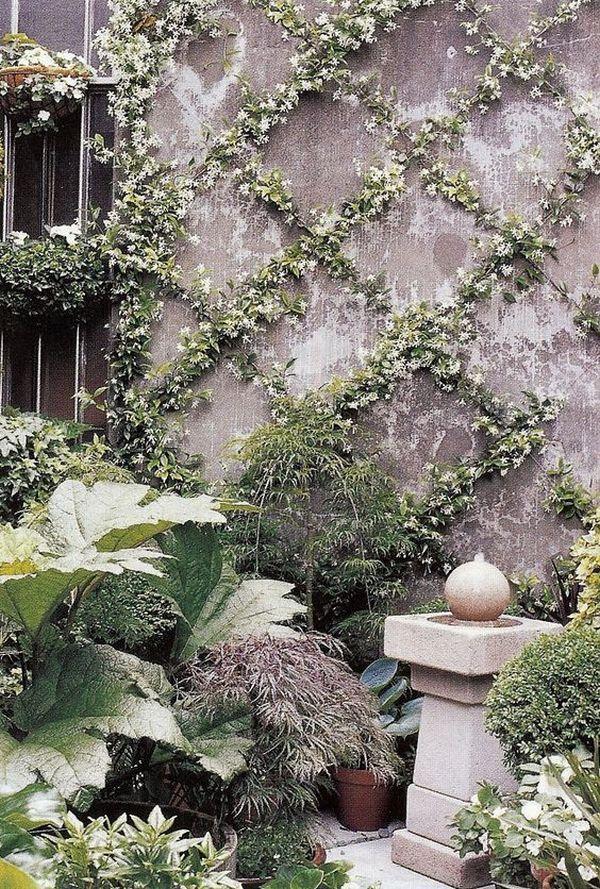 Αναρριχώμενα φυτά ιδέες (4)