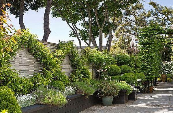 Αναρριχώμενα φυτά ιδέες (8)