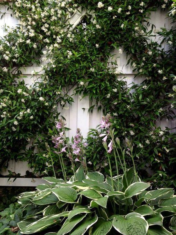 Αναρριχώμενα φυτά ιδέες (9)
