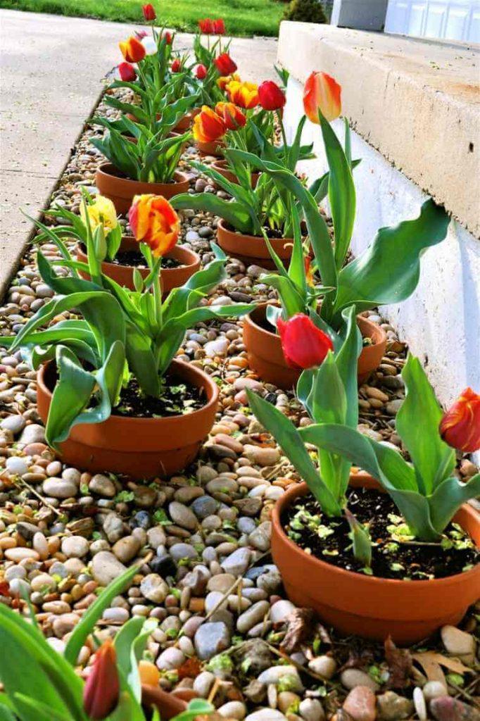 ιδέες σχεδιασμού μπροστινού κήπου και αυλής6