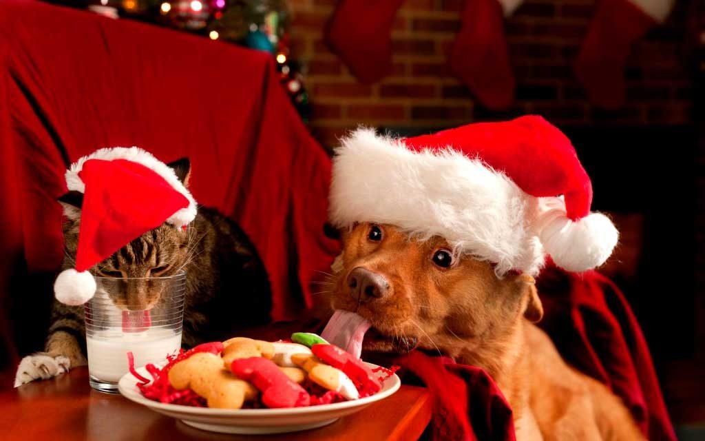 Χριστουγεννιάτικες εικόνες36