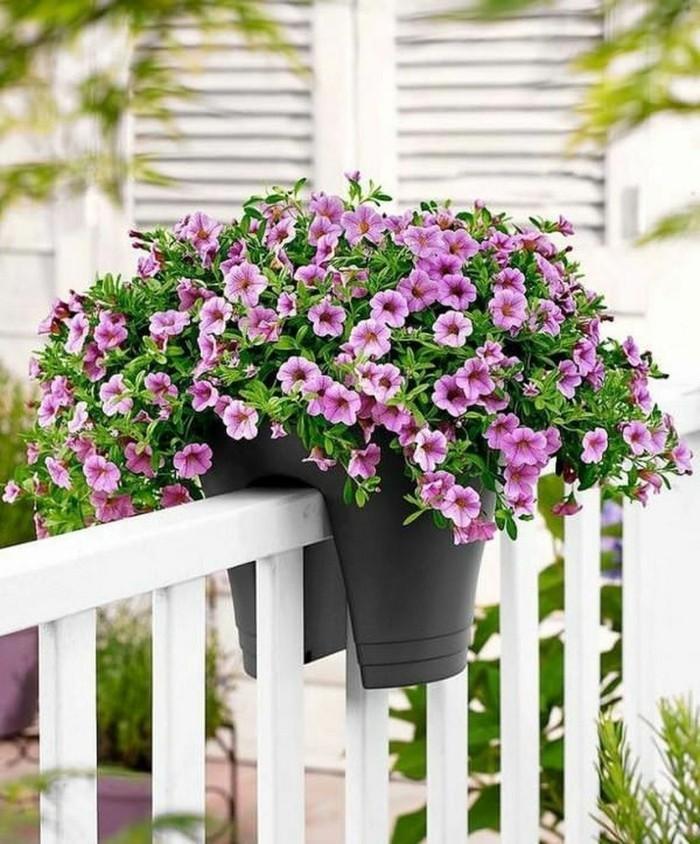 μπαλκόνι-φυτά-λουλούδια10