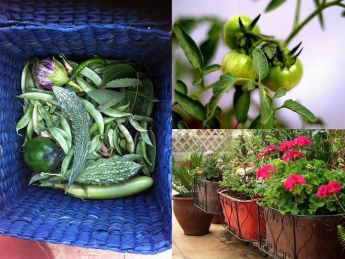 μπαλκόνι-φυτά-λουλούδια14