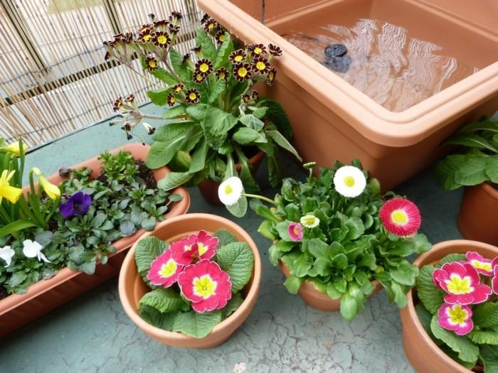 μπαλκόνι-φυτά-λουλούδια17