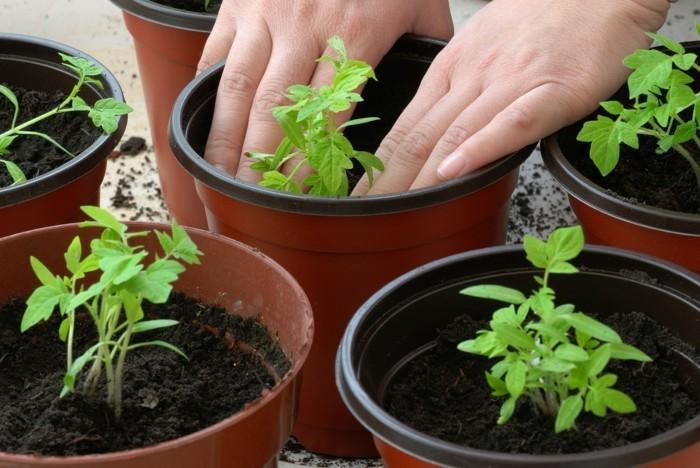 μπαλκόνι-φυτά-λουλούδια21