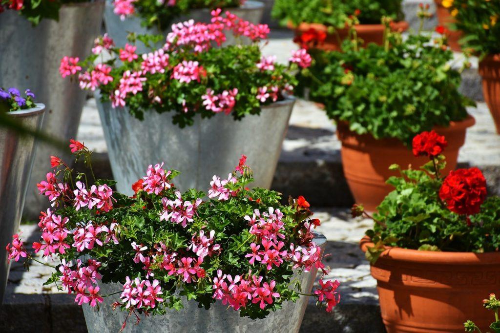 μπαλκόνι-φυτά-λουλούδια29