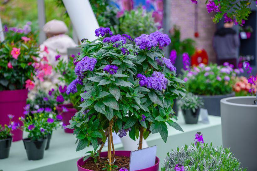 μπαλκόνι-φυτά-λουλούδια34