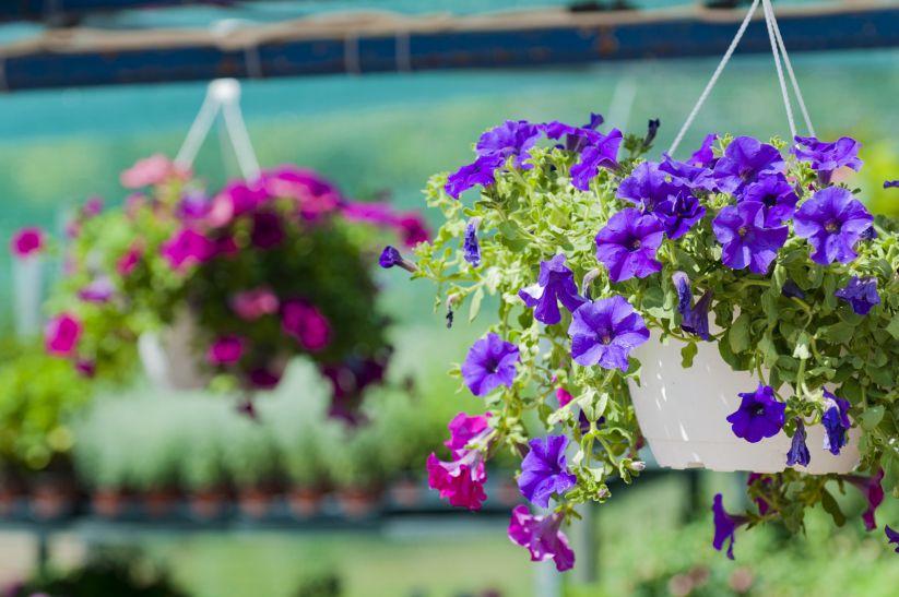 μπαλκόνι-φυτά-λουλούδια36