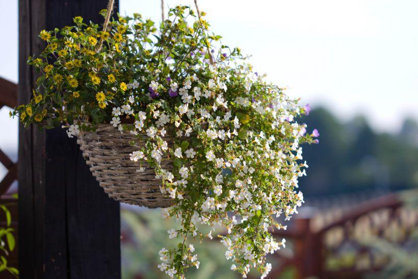 μπαλκόνι-φυτά-λουλούδια37