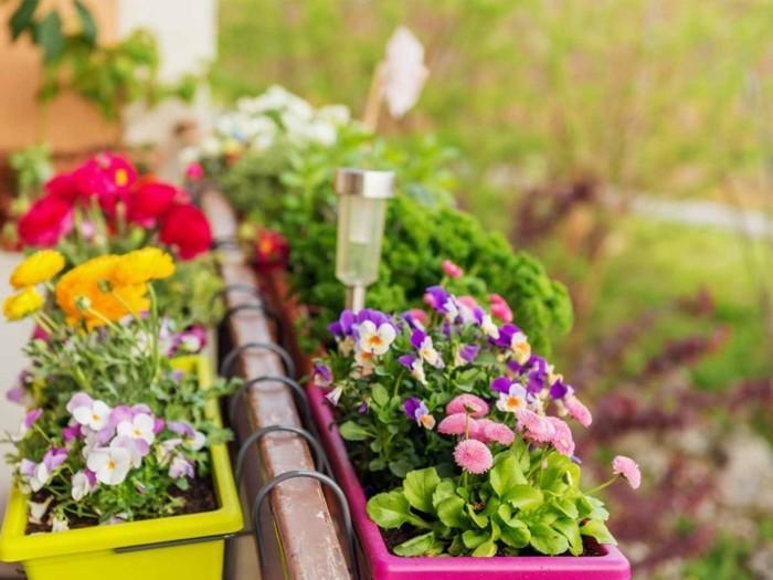 μπαλκόνι-φυτά-λουλούδια8