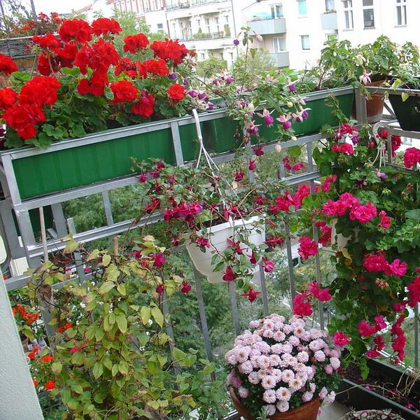 Λουλούδια στο μπαλκόνι1